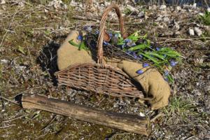 Børnehaver på rejse i vikingetiden og på opdagelse i jernalderen